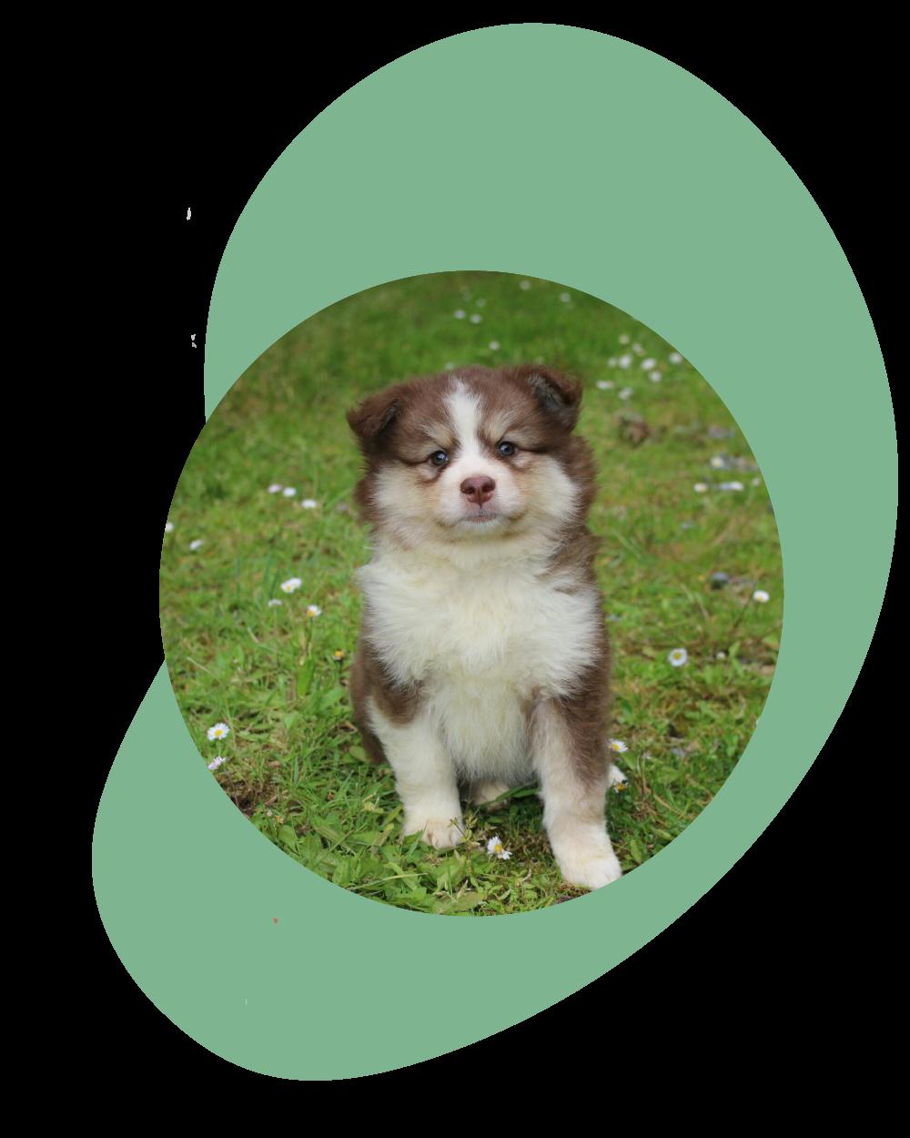 adoption chien et chiot